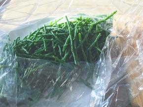Samphire/ Sea Asparagus/ Saint Peter's herb/ Mermaid's Kiss/ SalicorniaEuropaea