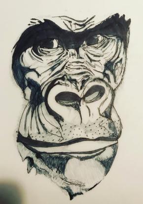 Gorilla Face Development